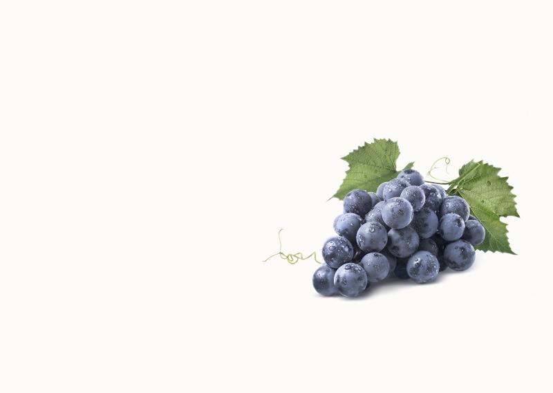 vina zadro berba grožđa (1)