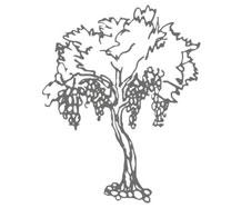 uvod-grozdje_vinarija-zadro-vina